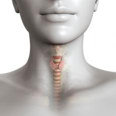 Thyroïde : Rôle, fonctionnement et problèmes